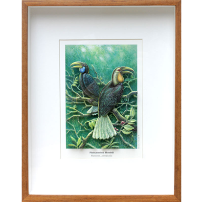 Picture of Plain-pouched HornbillRhyticeros subruficollis 3D Picture Frame