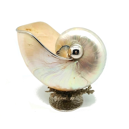 """Picture of Nautilus shell 6"""" with coral stand"""