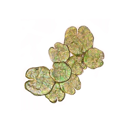 Picture of Gold-green Lotus leaf Wall art Home decor