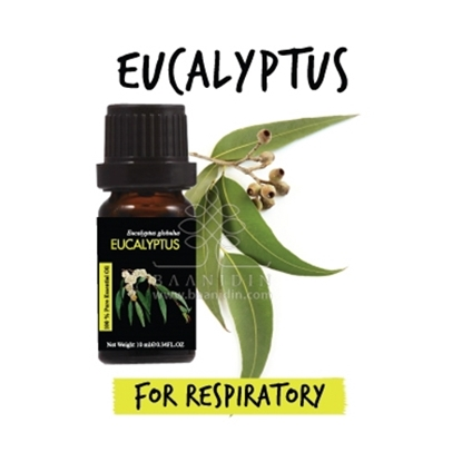 Picture of Baanidin Eucalyptus Essential Oil (10 ml )